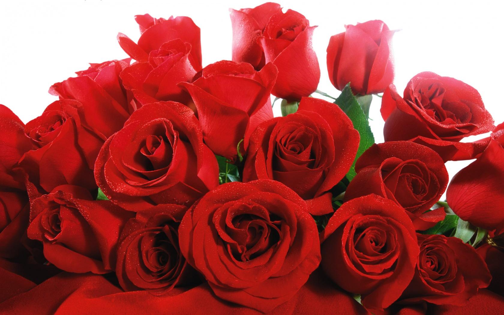 Цветы живые фото 0004