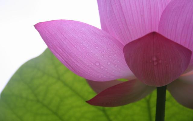 Цветы живые - фото 0005