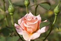 Цветы живые - фото 0006