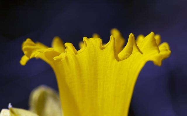 Цветы живые - фото 0008