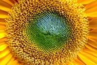 Цветы живые - фото 0010