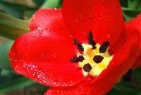 Цветы живые - фото 0011