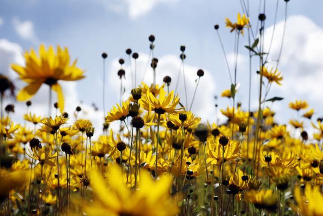 Цветы живые - фото 0012