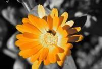 Цветы живые - фото 0013