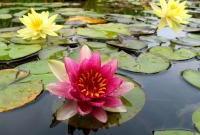 Цветы живые - фото 0014