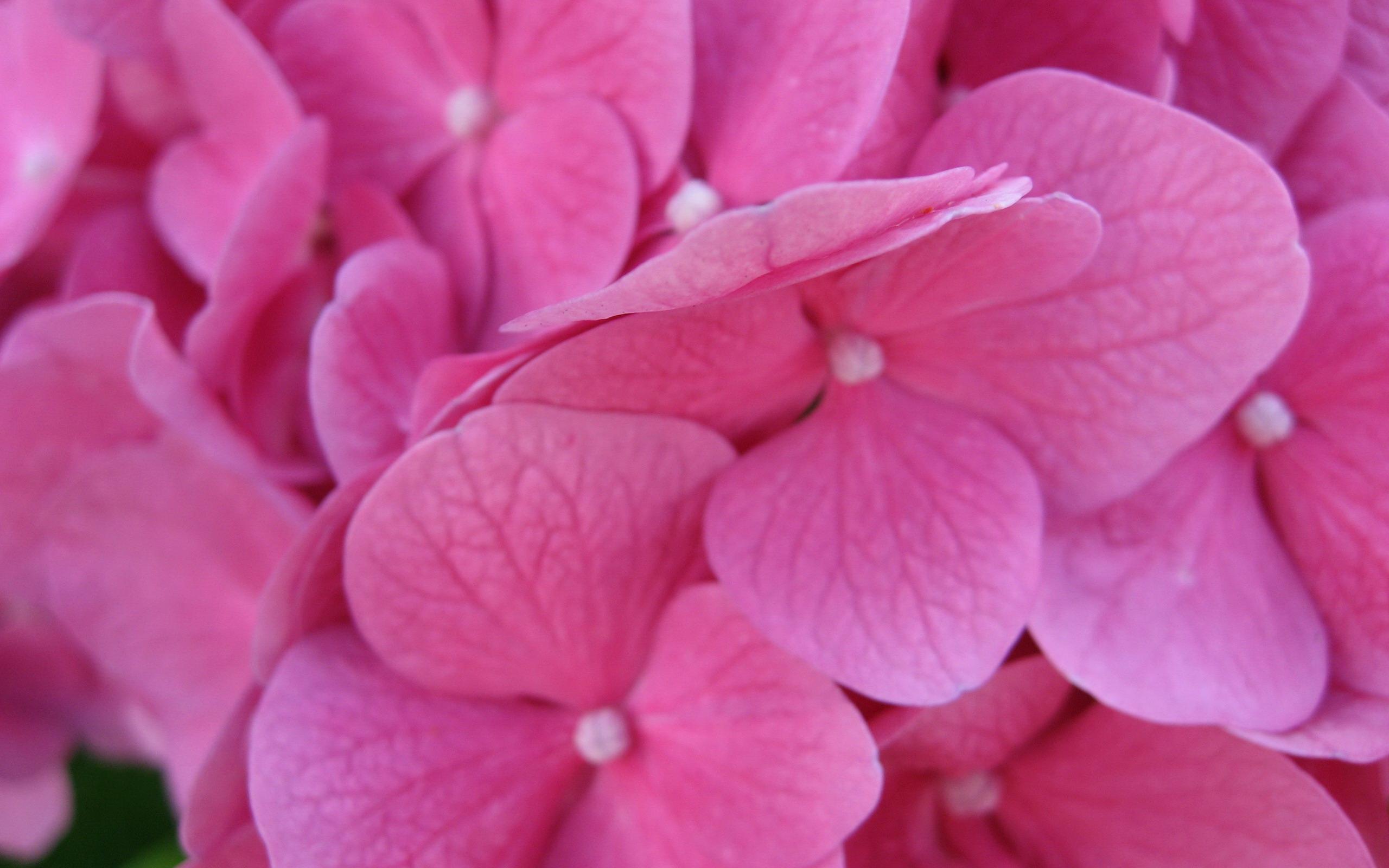 Цветы живые фото 0015