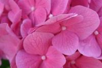 Цветы живые - фото 0015