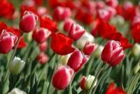 Цветы живые - фото 0016