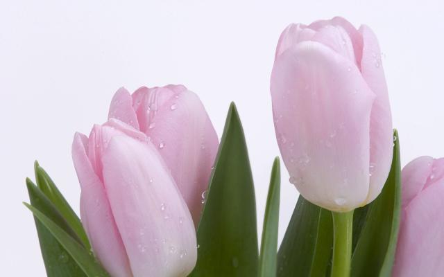 Цветы живые - фото 0017