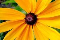 Цветы живые - фото 0018