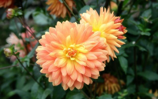 Цветы живые - фото 0020
