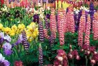 Цветы живые - фото 0021