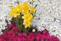 Цветы живые - фото 0022
