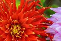 Цветы живые - фото 0023