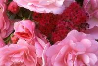 Цветы живые - фото 0025