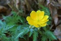 Цветы живые - фото 0029
