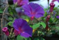 Цветы живые - фото 0030