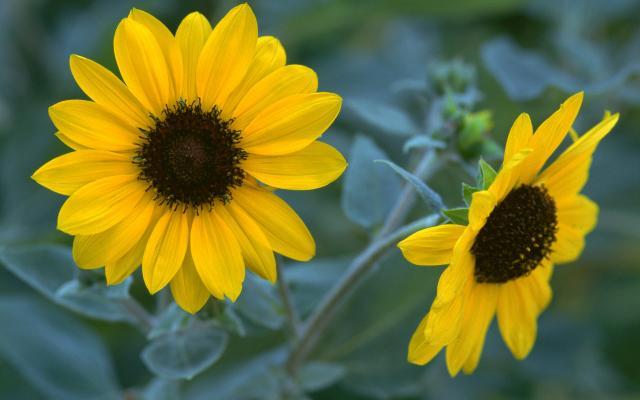 Цветы живые - фото 0031