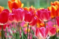 Цветы живые - фото 0034
