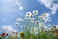 Цветы живые - фото 0035