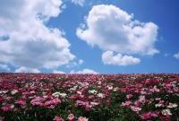 Цветы живые - фото 0036