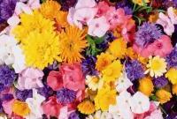 Цветы живые - фото 0037