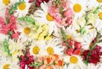 Цветы живые - фото 0038