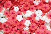 Цветы живые - фото 0039