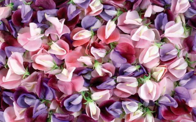 Цветы живые - фото 0040