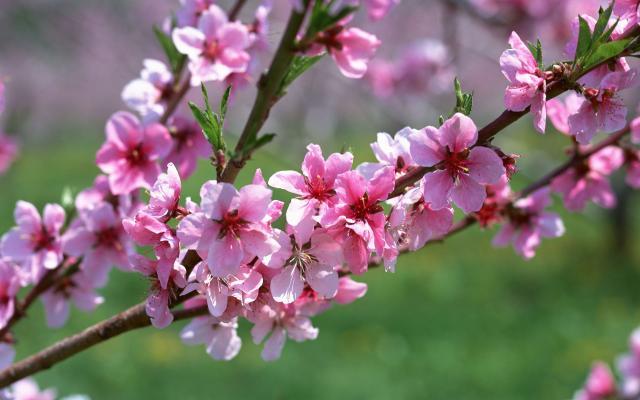 Цветы живые - фото 0041