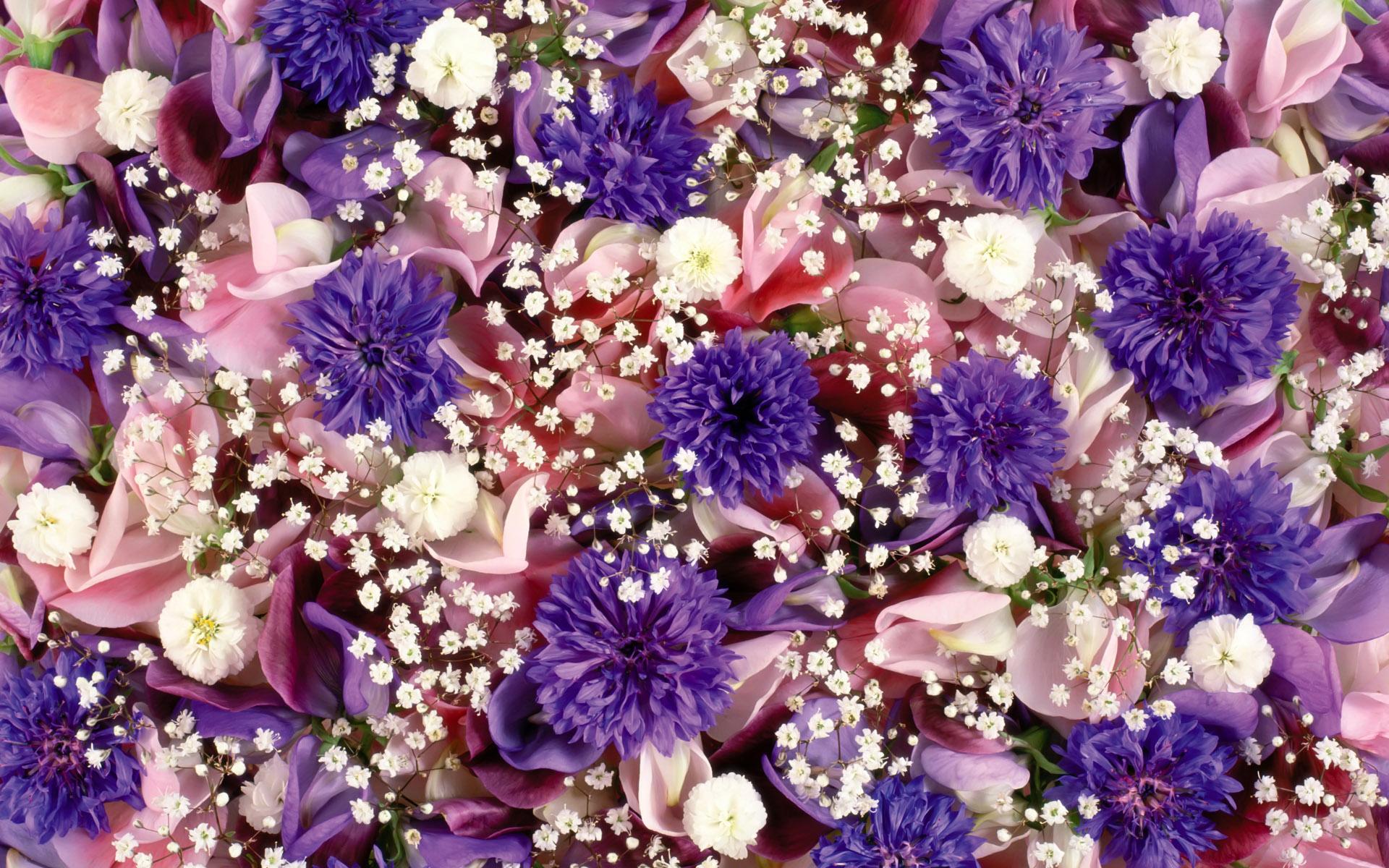 Цветы живые фото 0042