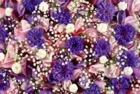 Цветы живые - фото 0042