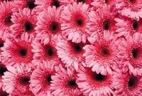 Цветы живые - фото 0043