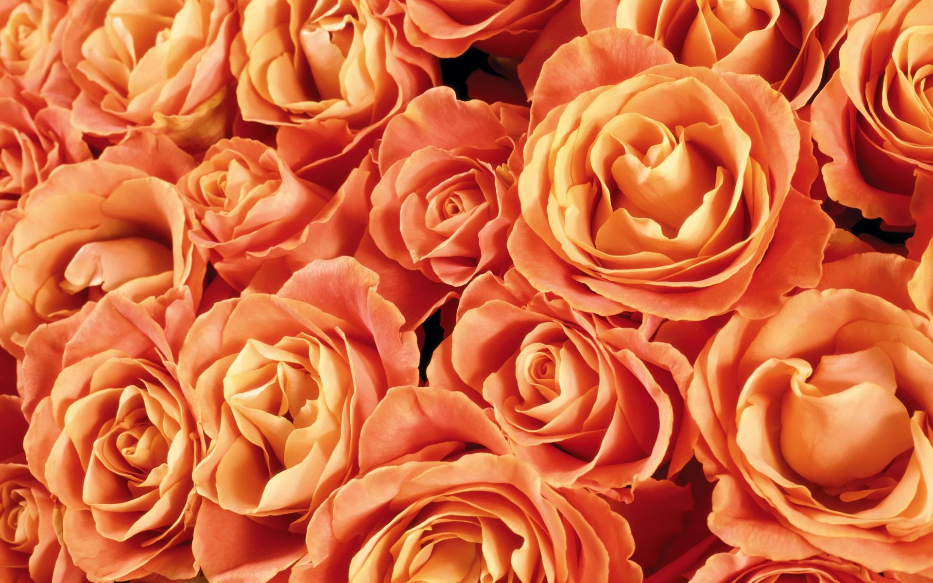Фотообои на тему цветы живые