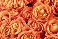 Цветы живые - фото 0044