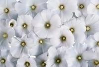 Цветы живые - фото 0045