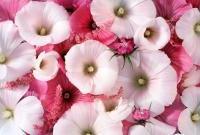 Цветы живые - фото 0046