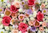 Цветы живые - фото 0047