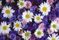 Цветы живые - фото 0048