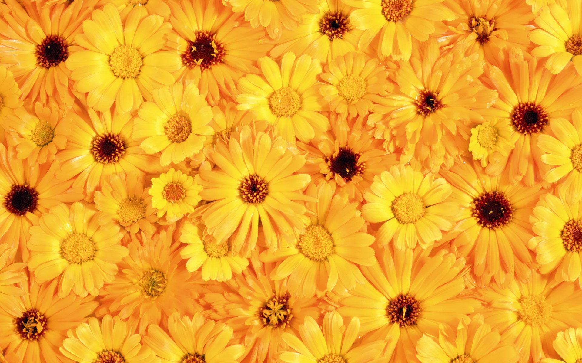 Цветы живые фотообои цветы живые фото