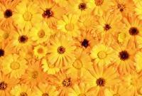 Цветы живые - фото 0050