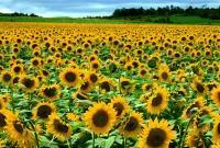 Цветы живые - фото 0052
