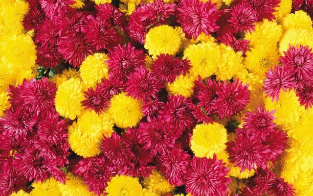 Цветы живые - фото 0053