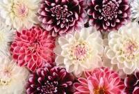 Цветы живые - фото 0054