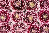 Цветы живые - фото 0055