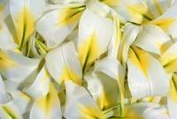 Цветы живые - фото 0056