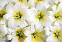 Цветы живые - фото 0057