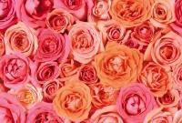 Цветы живые - фото 0058