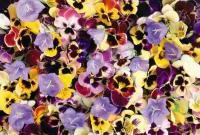 Цветы живые - фото 0059