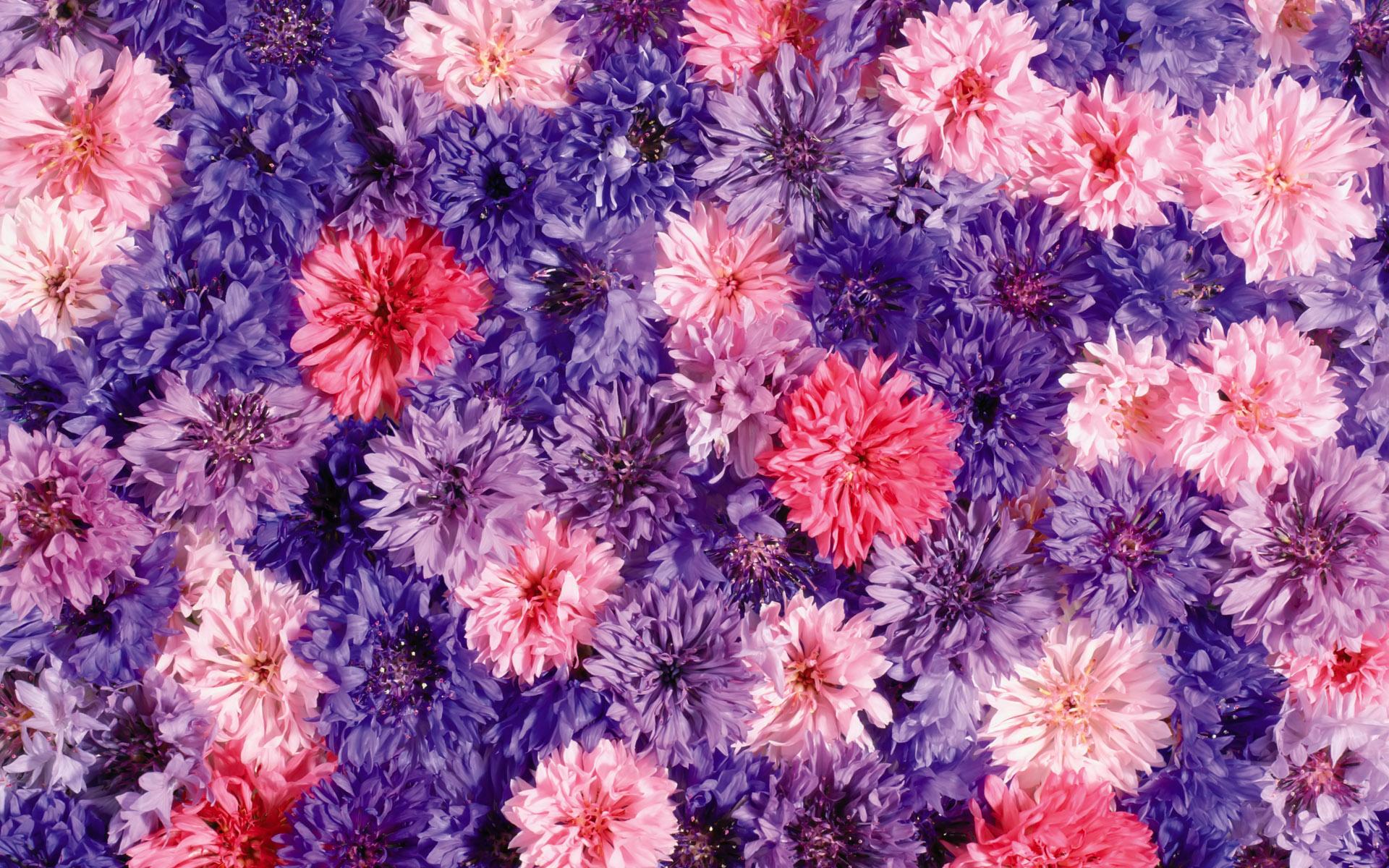 Цветы живые фото 0060
